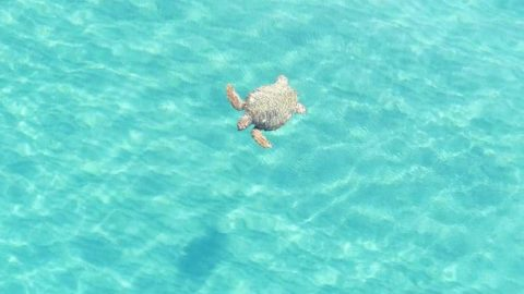 Stunning footage shows how drones can boost turtle conservation