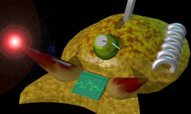 Virtual predator is self-aware, behaves like living counterpart