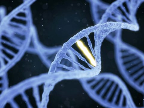 New software helps detect adaptive genetic mutations