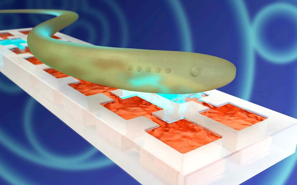Scientists mimic neural tissue in Army-funded research