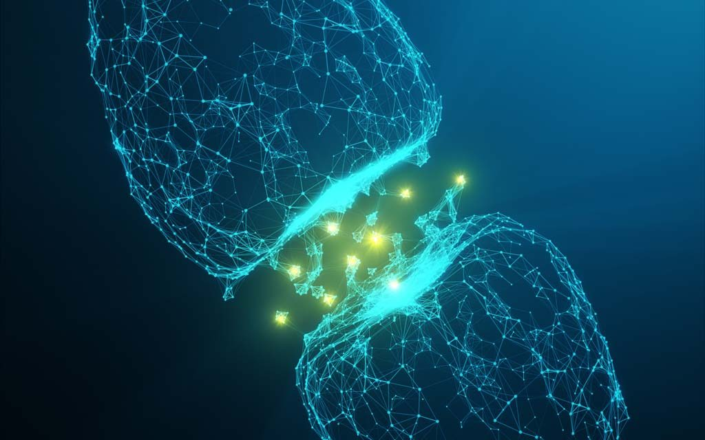 New Software Designed for Rapid, Automated Identification of Dendritic Spines