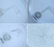 Implantable, biodegradable devices speed nerve regeneration in rats